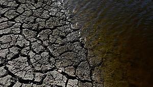 100 ton balık kuraklık nedeniyle öldü