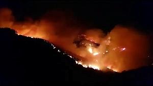 Kanarya Adaları'nda orman yangını