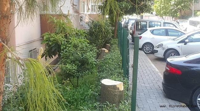CHP'li Küçükçekmece Belediye Ağaçları katletti