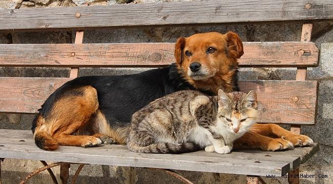 """""""Devlet hayvan hastaneleri lüks değil ihtiyaç"""""""