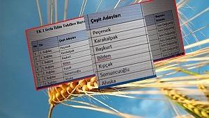 Buğdaylara Türk Boylarının İsmi Verilmişti! Değiştiriyorlar
