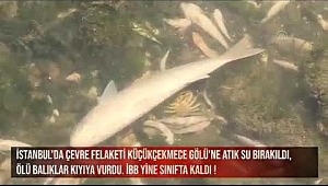Haliç'ten sonra Küçükçekmece Gölü'nde toplu balık ölümlerinin nedeni ne? İstanbul 25 yıl öncesi nemi dönüyor?