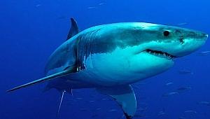 Corona virüsü aşısıyla ilgili çarpıcı iddia: Yarım milyon köpek balığı katledilebilir