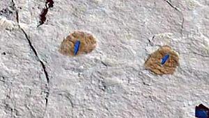 Suudi Arabistan'da 120 bin yıllık ayak izleri bulundu