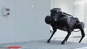 Elon Musk'ın robot köpeği Spot'a Çin'den rakip çıktı