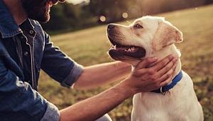 Hayvanlar da duygularını insanlar gibi yaşıyor