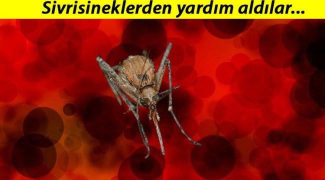 Japonya'dan çığır açacak buluş... Sivrisineğin koklama duyusundan kanser dedektörü geliştirdiler!