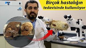 'Ölümsüzlük mantarı' Türkiye'de üretildi! Fiyatı dudak uçuklattı...