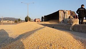 Tır devrildi tonlarca mısır yolu kapladı