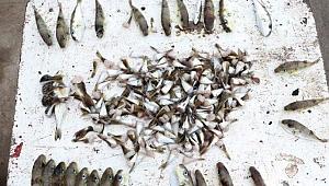 Uzmanlar uyardı: Balon balığı çok tehlikeli