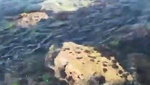 Bakan Kurum: Balıklarımız görünmeye başladı