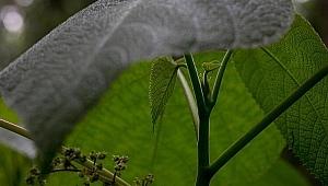 Dünyanın en korkutucu bitkisi!