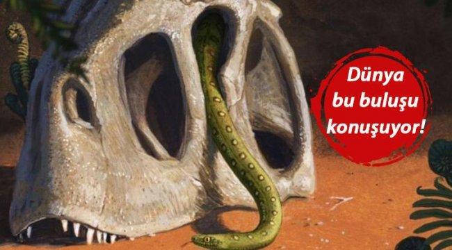 Çarpıcı araştırma ortaya çıkardı: Göktaşları dinozorları yok etti, yılanların kaderi değişti!