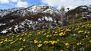 Kış Mevsiminde Bahar