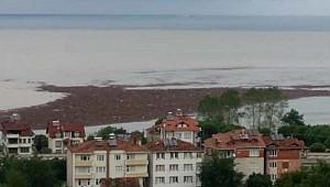 Ordu'da selin ardından denizde fındık adası oluştu