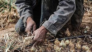İsrail'deki Taylandlı işçiler ölümle burun buruna