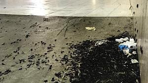 Kabe de bir ilk  Mekke şehrinde böcek istilası yaşandı.