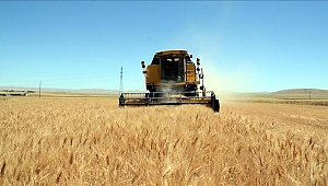 Kazakistan tahıl ihracatını artırdı