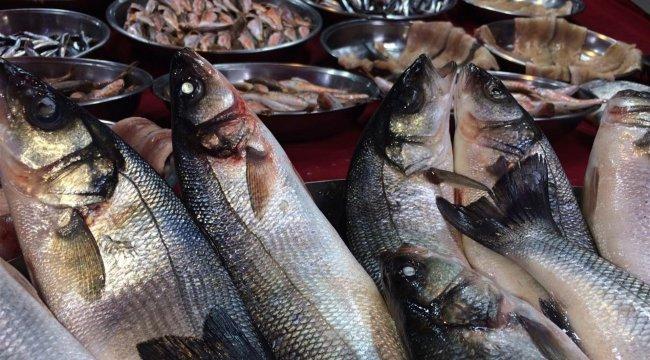 Balıkçıların umudu 'Torik'